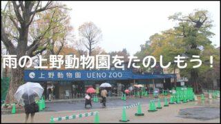 雨でも楽しい子連れ上野動物園