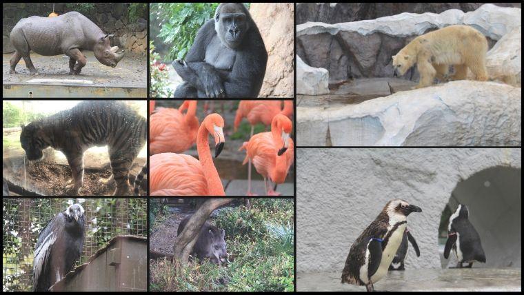 雨が降っていると、動物が全然見れないイメージがありますがほぼ全部の動物を見ることができました