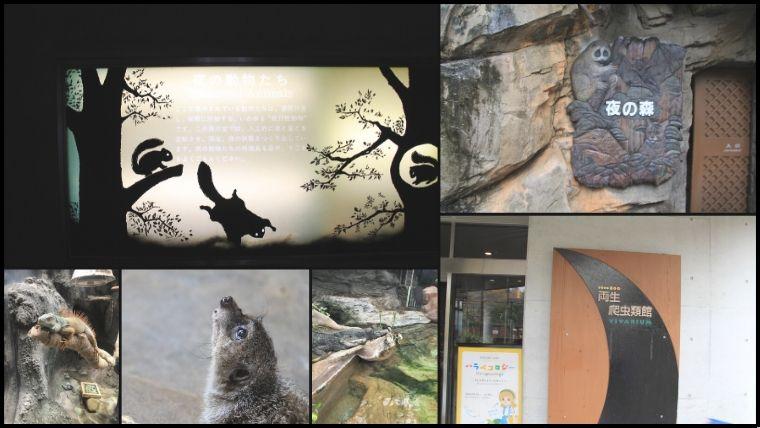 雨の上野動物園では、雨しのぎや寒さ対策のために、屋内施設を効率的にまわるのがおすすめ